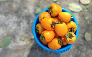 persimmons in a blue bowl