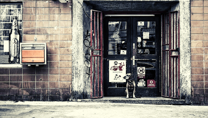 A dog outside a store's door