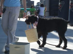 Dog obedience training using a basket