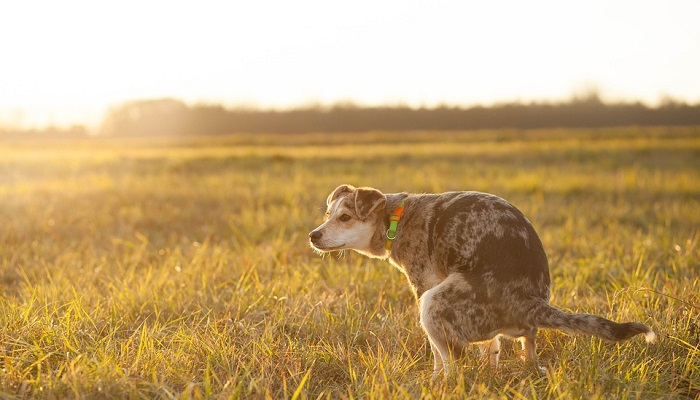 How Long Can a Dog Go Without Pooping?