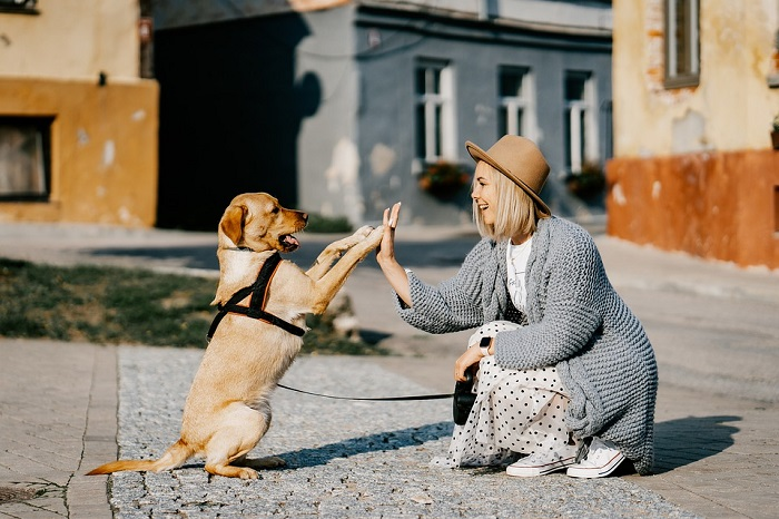 Female dog owner training her pet