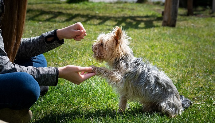 How Much Does Dog Training Cost?