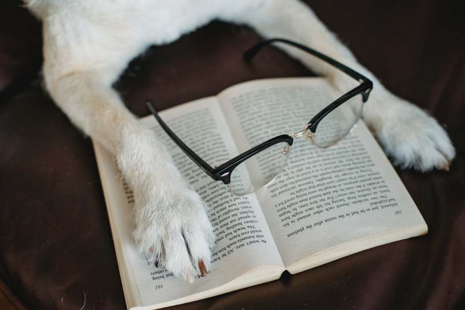 Dog putting paw on book with eyeglasses